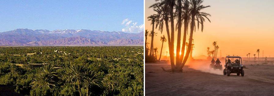 palmeral de Marrakecht